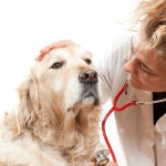 dog Health and Veterinary Services