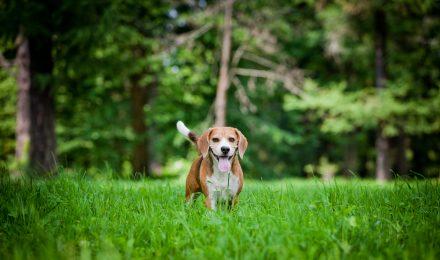 Own a Dog? Best Ways to Save Money